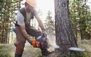 Вакансия вальщик леса